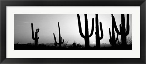 Framed Silhouette of Saguaro cacti, Saguaro National Park, Tucson, Arizona Print