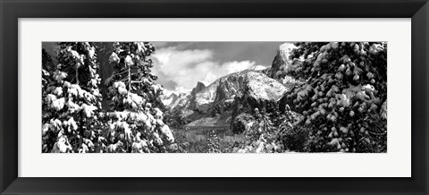 Framed Snowy trees in winter, Yosemite Valley, Yosemite National Park, California Print