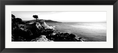 Framed Lone Cypress Tree, 17-Mile Drive, Carmel, California Print