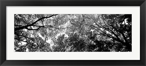 Framed Low angle view of trees Print