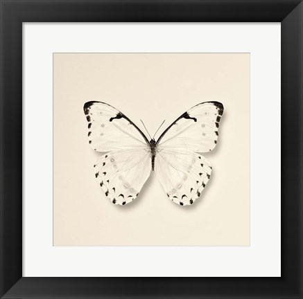 Framed Butterfly II Print