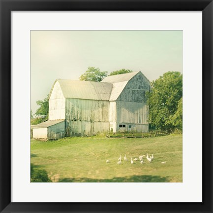 Framed Farm Morning III Square Print