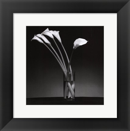 Framed Arums 1990 Print