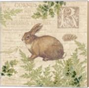 Woodland Trail IV (Rabbit)