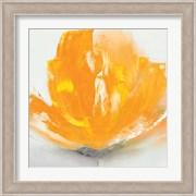 Wild Orange Sherbet II