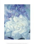 White Rose with Larkspur No. 2, 1927
