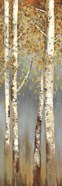 Butterscotch Birch Trees I