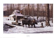Sugar Bush  Fine-Art Print