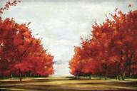 Red Glory  Fine-Art Print