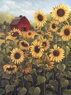 Field of Sunflowers  Fine-Art Print