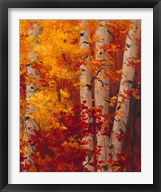 The Magnificent Season of Autumn C  Frame