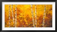 The Splender of Autumn  Frame