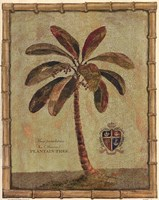Framed Caribbean Palm IV With Bamboo Border