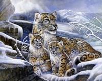 Framed Snow Leopards