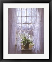 Framed Cape Primrose