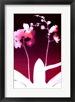 Framed Dark Plum Orchid