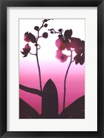 Framed Light Plum Orchid