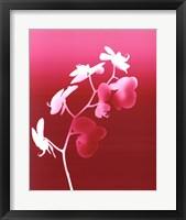 Framed Summer Orchid