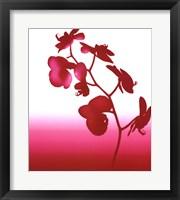 Framed Spring Orchid