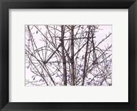 Framed Tour de Tree