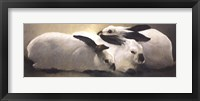 Framed Californian Rabbits