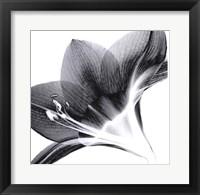 Amarlis 2 Framed Print