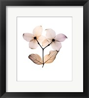 Framed Dogwood