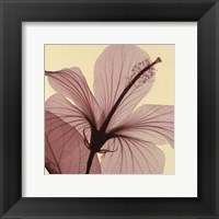 Hibiscus Framed Print