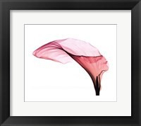 Framed Giant Calla Sm