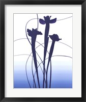 Framed Blue Iris
