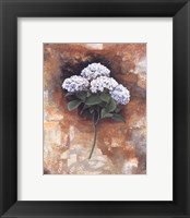Framed Hydrangea Royal