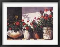 Framed Pots of Geraniums