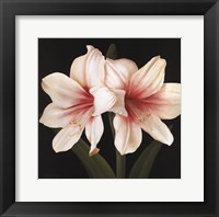 Framed Contemporary Lily I