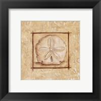 Sand Dollar Framed Print