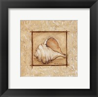Framed Conch