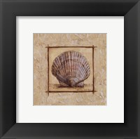 Fan Shell Framed Print