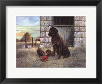 Playful Instincts Framed Print