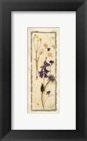 Dried Flowers IV Framed Print