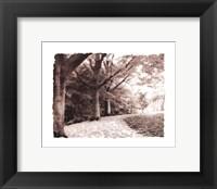 Framed Queen Elizabeth Park