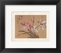 Framed Peony Blossom II