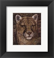 Elusive Encounter Framed Print