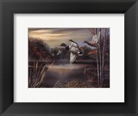 Morning Call Framed Print