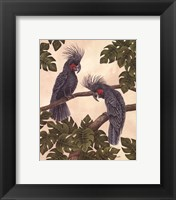 Framed Black Palm Cockatoos