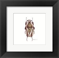 Framed Bug #10