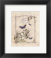 Framed Jasmine Butterfly