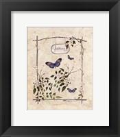 Framed Jasmine Butterfly