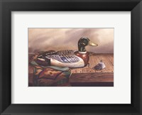 Framed Mallard Decoy