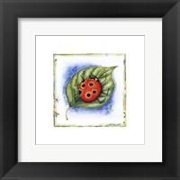 Framed Little Ladybug