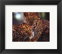 Framed Leopards