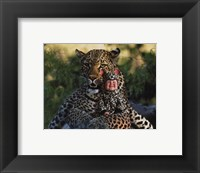 Imaginary Safari Leopar Framed Print